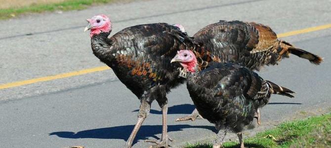 Turkey Trot Events Near Los Angeles