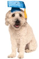 Graduation Pet Costume