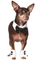 Tuxedo Bowtie and Cuffs Pet Accessory Set