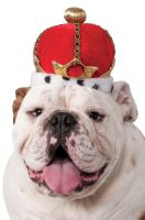 Red King Crown Pet Accessory