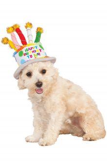 Birthday Cake Hat Pet Accessory